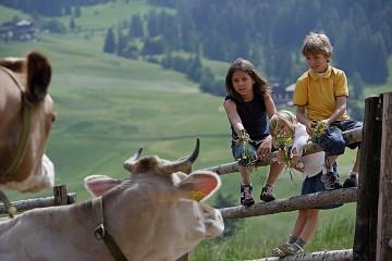 Farma  (Południowy Tyrol)